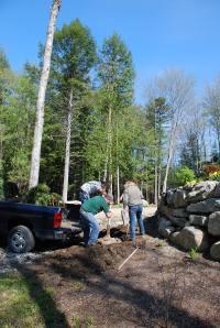 Terri Wilcox Garden Design team plants a large white birch near the stone retaining wall.