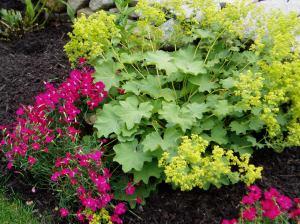 Wilcox Garden Design