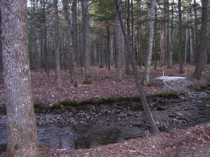 The site where our bridge and Zen Garden now sit.