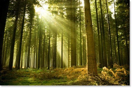 Yankee Barn Homes Supports Susutainable Forest Programs