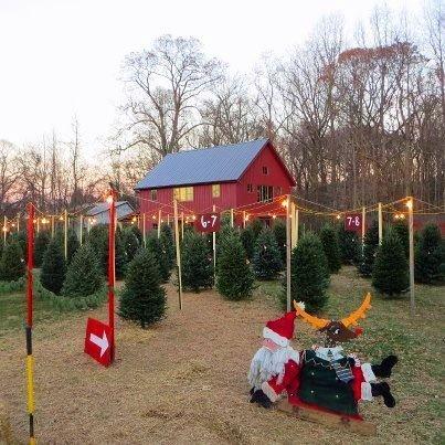 Eadgewater Christmas Tree Stand